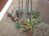 カラーリーフの下草