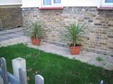 家庭の鉢植え