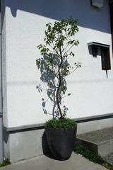 shigaraki001