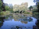 睡蓮の池2